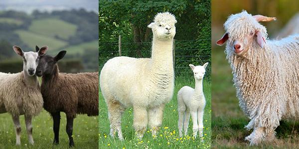 fils à tricoter fibres naturelles animales
